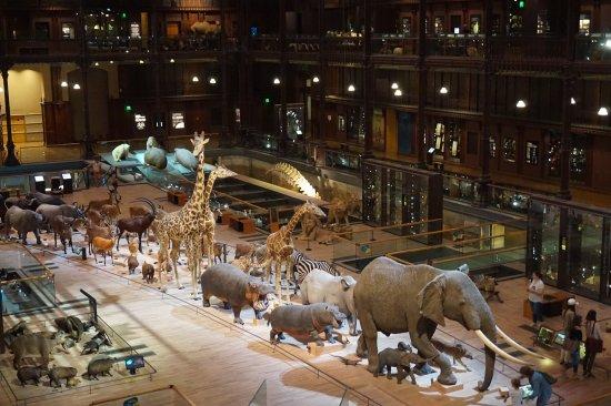 Museu Galerie de l'évolution em Paris